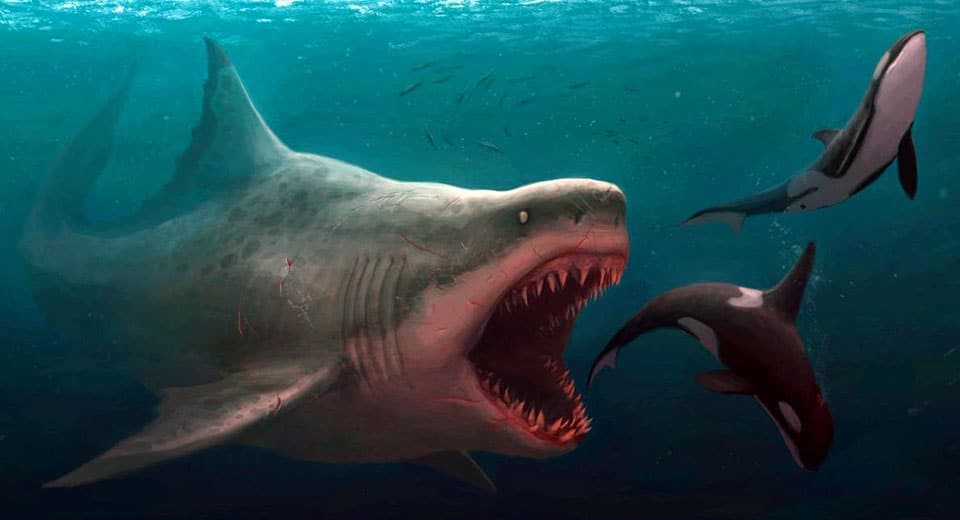 megalodon sightings Archives - Scientific Mystery